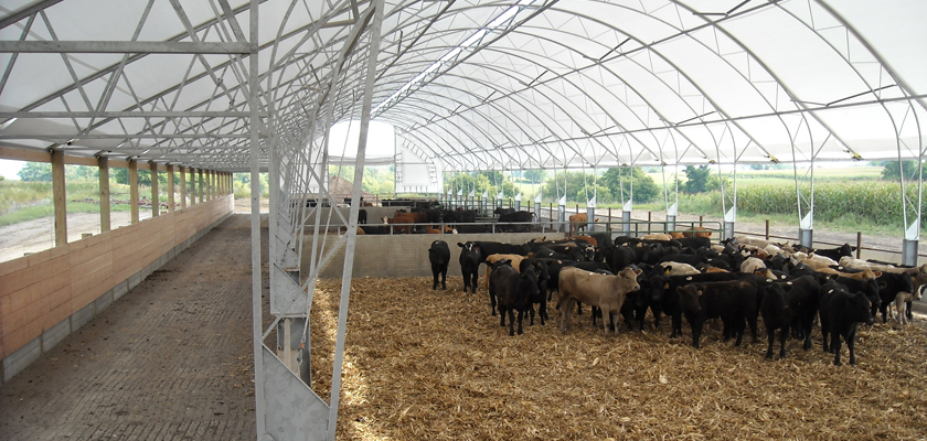 Fabric Covered Cattle Buildings Accu Steel